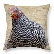 Plymouth Barred Rock Hen Throw Pillow