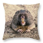 Pocket Gopher Chatting Throw Pillow