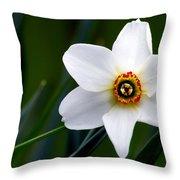 Poet's Daffodil Throw Pillow