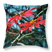 Poinsettia Africa Throw Pillow