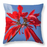 poinsettia from Madagascar Throw Pillow