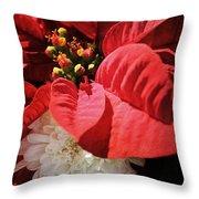 Poinsettia In Bloom Throw Pillow