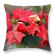 Poinsettia In Red And White Throw Pillow