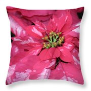 Poinsettia Passion Throw Pillow