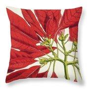 Poinsettia Pulcherrima Throw Pillow