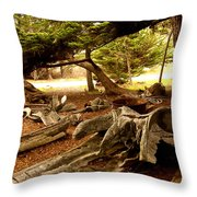 Point Lobos Whalers Cove Whale Bones Throw Pillow by Barbara Snyder