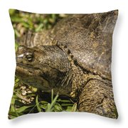 Pointed Nose Florida Softshell Turtle - Apalone Ferox Throw Pillow
