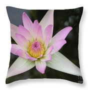 Pointed Pink Lily Throw Pillow