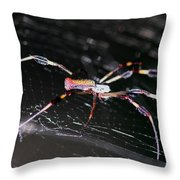 Points Of Contact - Spider - Orb Weaver Throw Pillow