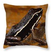 Poison Dart Frog Portrait Amazonian Throw Pillow