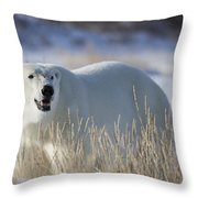 Polar Bear In The Sunshinechurchill Throw Pillow