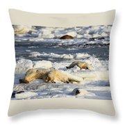 Polar Bear Mother And Cub Grooming Throw Pillow