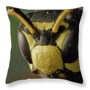 Polistes Dominula 41 Throw Pillow
