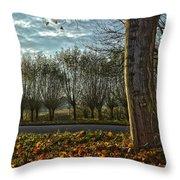 Pollard Willows In Rotterdam Throw Pillow