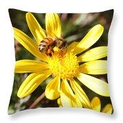Pollen-laden Bee On Yellow Daisy Throw Pillow
