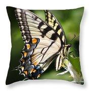 Polychromatic Beauty Throw Pillow