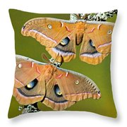 Polyphemus Moths Throw Pillow