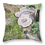 Polypores And Moss Throw Pillow