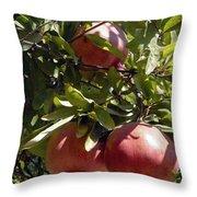 Pomegranate Tree  Throw Pillow