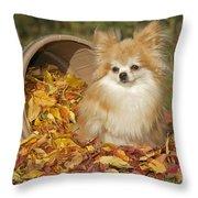 Pomeranian Dog Throw Pillow