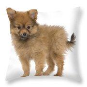 Pomeranian Puppy Dog Throw Pillow