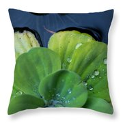 Pond Lettuce Throw Pillow