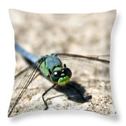 Pondhawk Upclose Throw Pillow