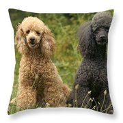 Poodle Dogs Throw Pillow