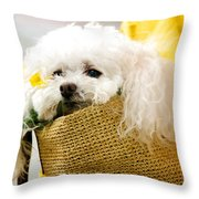 Poodle In Pouch Throw Pillow