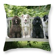Poodles And Other Dogs On A Bench Throw Pillow