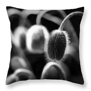 Poppies In Waiting Throw Pillow