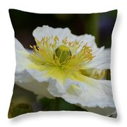 Poppy Adoration Throw Pillow