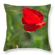 Poppy Blowing In The Wind Throw Pillow