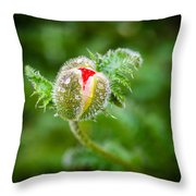 Poppy Bud Throw Pillow