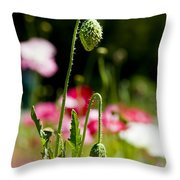 Poppy Getting Ready Throw Pillow