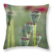 Poppy Pods Throw Pillow