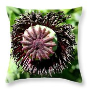 Poppy Seed Capsule Throw Pillow