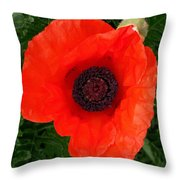 Poppy Of Remembrance  Throw Pillow