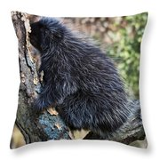 Porcupine Sleeping Throw Pillow
