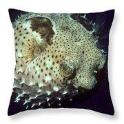 Porcupinefish Throw Pillow