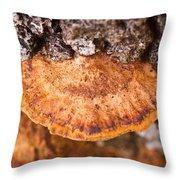 Poria Shelf Fungi 1 Throw Pillow