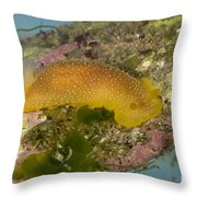 Porostome Nudibranch Throw Pillow