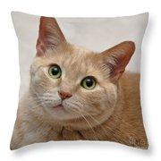 Portrait - Orange Tabby Cat Throw Pillow