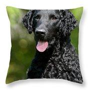 Portrait Black Curly Coated Retriever Dog Throw Pillow