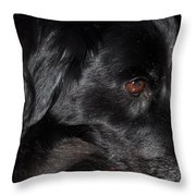 Portrait Of A Border Collie Throw Pillow