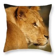 Portrait Of A Dreamy Lioness  Throw Pillow