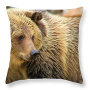 Portrait Of A Grizzly Throw Pillow