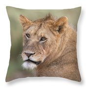 Portrait Of A Lioness, Panthera Leo Throw Pillow