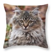 Portrait Of A Maine Coon Kitten Throw Pillow