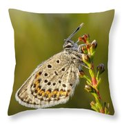 Portrait Of A Morning Dew Butterfly Throw Pillow